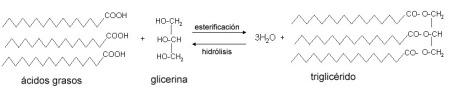 Reaccions d'esterificació i hidròlisi